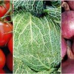 Hortalizas orgánicas